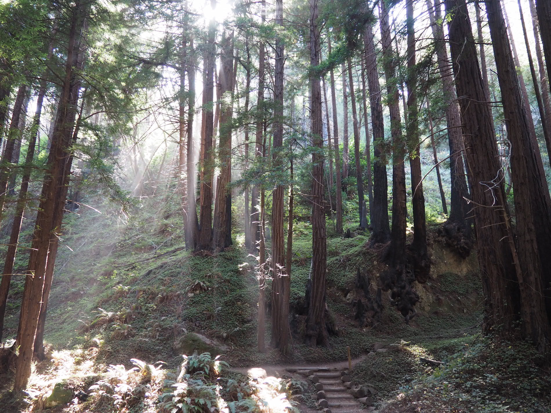 Big_Sur_forest