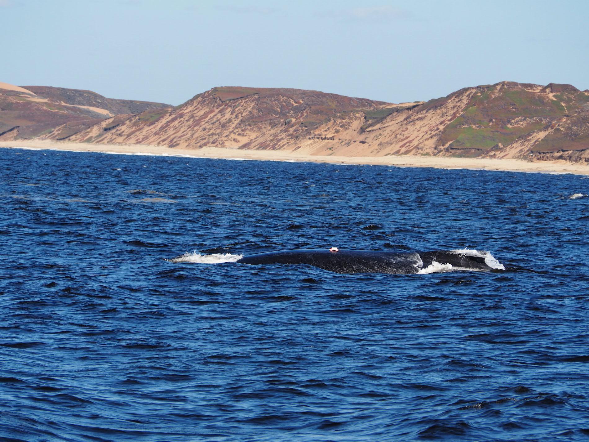 Monterey_WhaleWatch